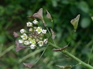 Detalle de las flores