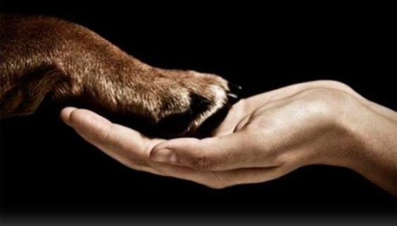 domesticacion_perros
