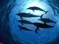 delfines-mar-149979